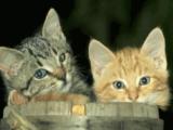 cat_R.jpg